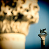 The Piazzetta winged lion (background) and a column from the Doge's Palace (foreground), Venice, Italy