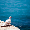 Pigeon looking at the sea