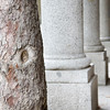 A tree trunk and granite columns
