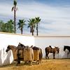 Horses for a bullfight, Spain