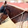 The head of a picador's horse