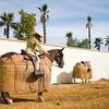 Picador ready for a bullfight