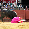 The bullfighter Curro Diaz being caught by the bull