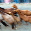 """Motion blurred image of the """"saca de las yeguas"""" festival, town of Almonte, province of Huelva, Andalusia, Spain. Dating back to 1504, every 26th of June, the """"yegüerizos"""" (cowboys or riders who look after the herds) gather and take the wild mares and colts out of Doñana marshland, where they have been freely grazing in the winter, and lead the """"tropas"""" (herds) to the town of Almonte."""