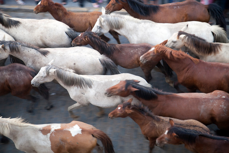 """Herd of horses, """"Saca de las yeguas"""" festival, town of Almonte, province of Huelva, Andalusia, Spain. Dating back to 1504, every 26th of June, the """"yegüerizos"""" (cowboys or riders who look after the herds) gather and take the wild mares and colts out of Doñana marshland, where they have been freely grazing in the winter, and lead the """"tropas"""" (herds) to the town of Almonte."""