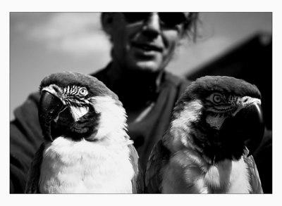 bird_trip-(b&w)