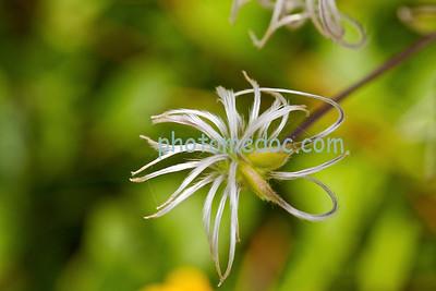 Wise White Flower