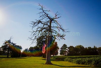 American Flag on a Barren Tree