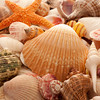 Assorted Sea Shells as a Background
