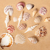 Grouping of Seashells into a shell design