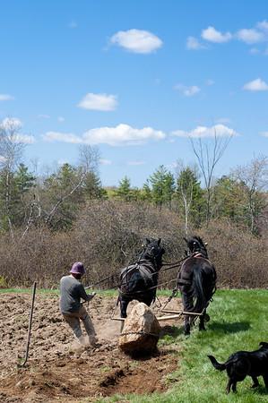 Maple Tree Farm_241