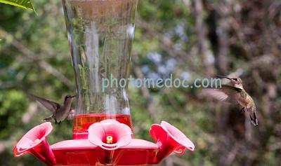2 Humming Birds