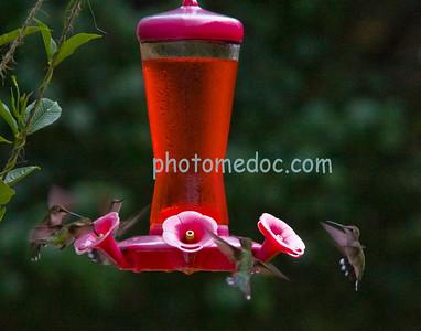 5 Humming Birds