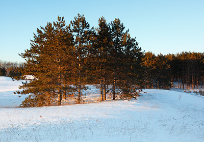 Pines of Gold - Kettle Moraine State Forest (Northern Unit)