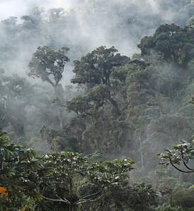 Chilma Bajo, 22 June 2013, Carchi, Ecuador