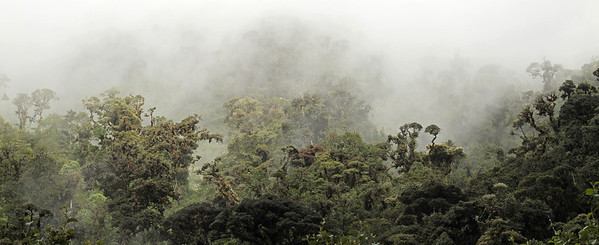 Cloud-forest at Guango, Napo, Ecuador