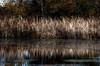 Marsh Autumn
