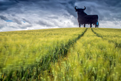 Osborne bull on a wheat field, long exposure shot, Castilleja del Campo, Seville, Spain. The Osborne bull is a 14-metre (46ft) high blacksilhouettedimage of abullin semi-profile. It is a former roadside advertising sign of the Osborne Sherry Company, and nowadays it has become a kind of national symbol in Spain.