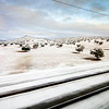 Olive grove covered by snow, as seen from the AVE train, La Mancha, Spain