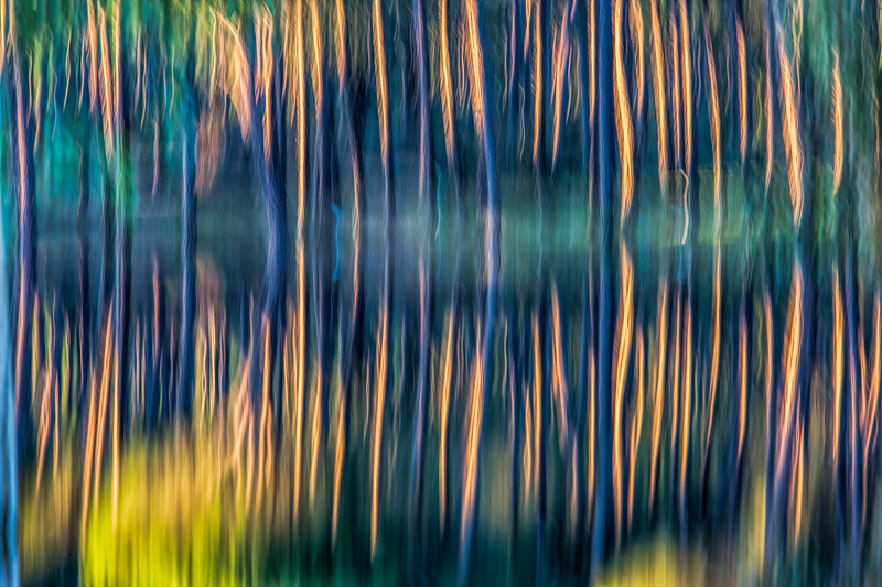 Pine trunks reflected on a pond, handheld long exposure shot.