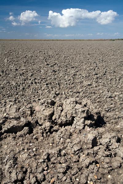 Flat farming fields in the Doñana marshland area, town of Isla Mayor, province of Seville, autonomous community of Andalusia, southwestern Spain