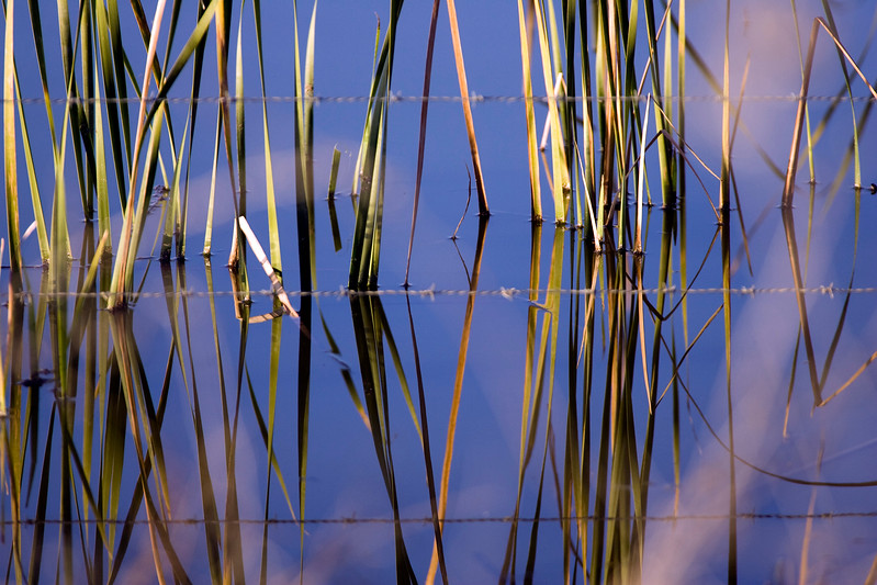 Barbed wire and aquatic plants, Doñana marshland area, town of Aznalcazar, province of Seville, autonomous community of Andalusia, southwestern Spain