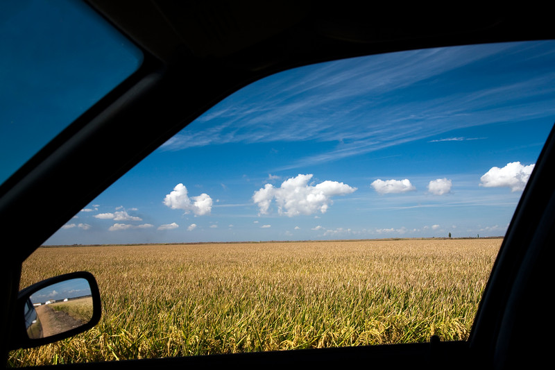 Rice fields as seen from a car, Doñana marshland area, town of Isla Mayor, province of Seville, autonomous community of Andalusia, southwestern Spain