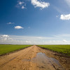 Track across the flat farmlands of Doñana marshland area, town of Aznalcazar, province of Seville, autonomous community of Andalusia, southwestern Spain