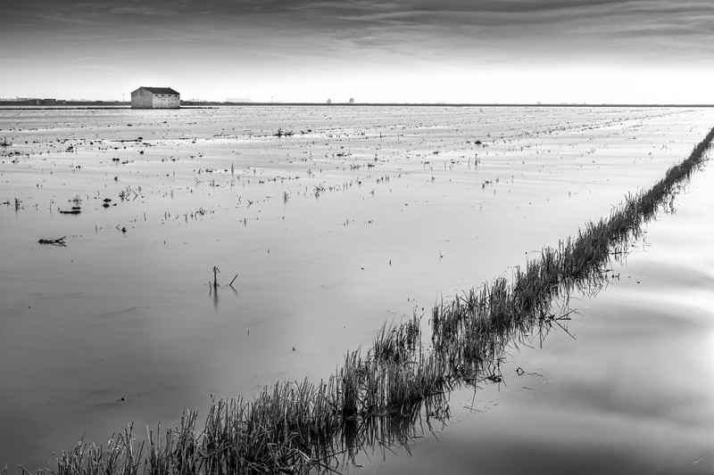 Black and white image of a harvested rice field, Isla Mayor, Seville, Spain