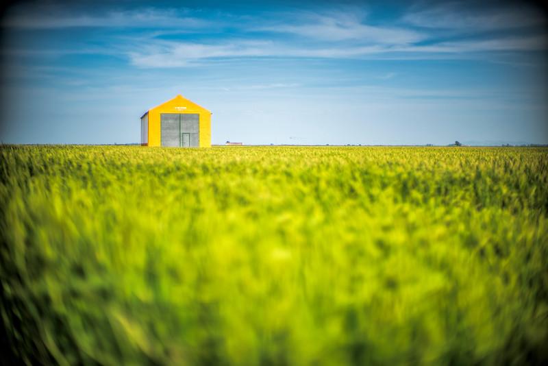 Barn on a rice field, Alfonso XII town, Isla Mayor, Seville, Spain.