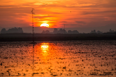 Sunrise in the rice fields, La Puebla del Rio, Seville, Spain