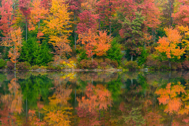 """Ricketts Reflection"" - Ricketts Glen State Park   Recommended Print sizes*:  4x6  