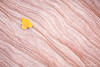 Yellow leaf on red and white sandstone layers
