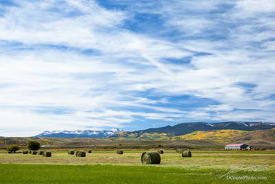Recently harvested hay bales on farmland in Colorado