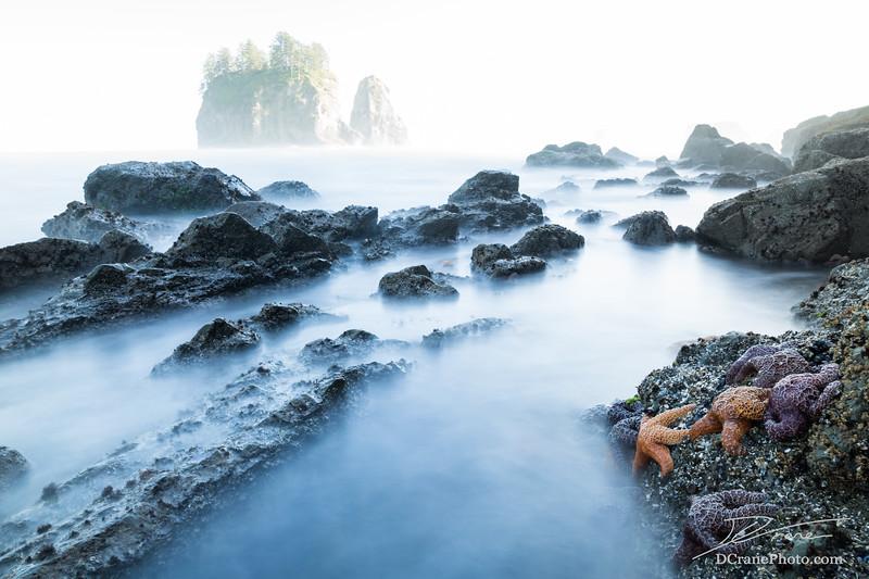 Sea Stars at Low Tide in High Key Ocean Scene