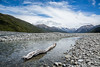 Driftwood log in braided river of New Zealand