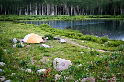 Tent By Lake and Wildflowers
