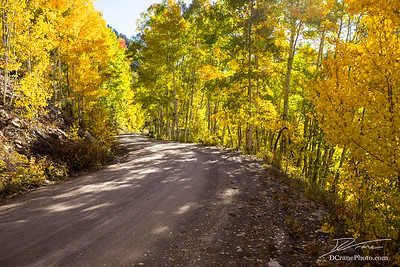 Dirt road through trees with fall colors