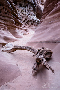 Log in Little Wildhorse slot canyon