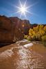 Stream through Coyote Gulch in autumn