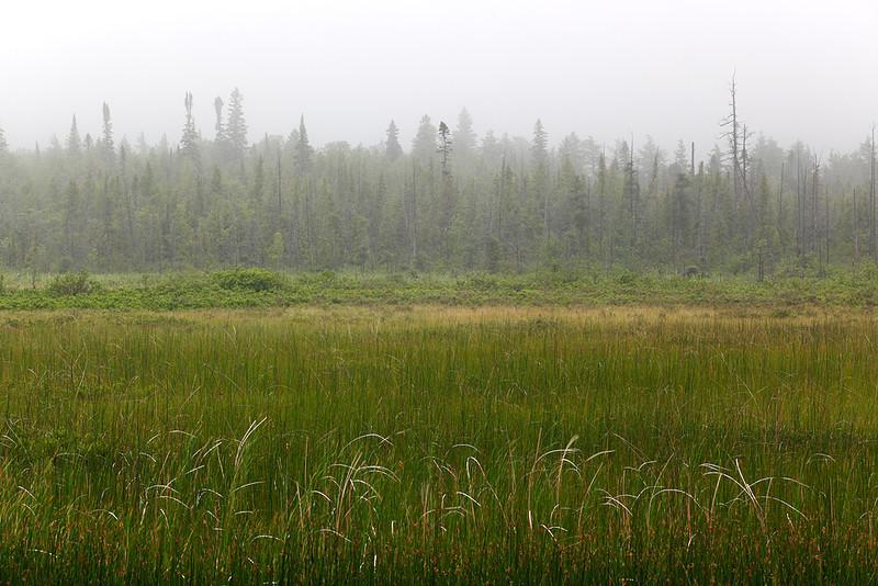 Cattails in Fog - Upper Michigan