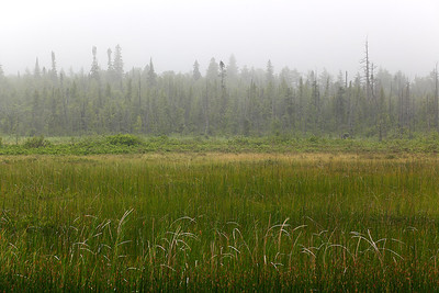 Cattails in Fog - Upper Michigan
