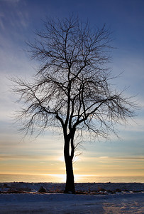 Northpoint Tree - Milwaukee, WI