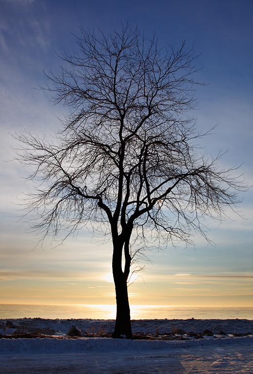 Northpoint Tree - Milwaukee, WI