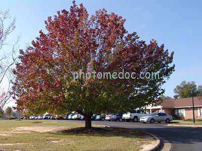 Autumn Colors on Tree