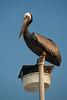 NC-2006-026: Kure Beach, New Hanover County, NC, USA