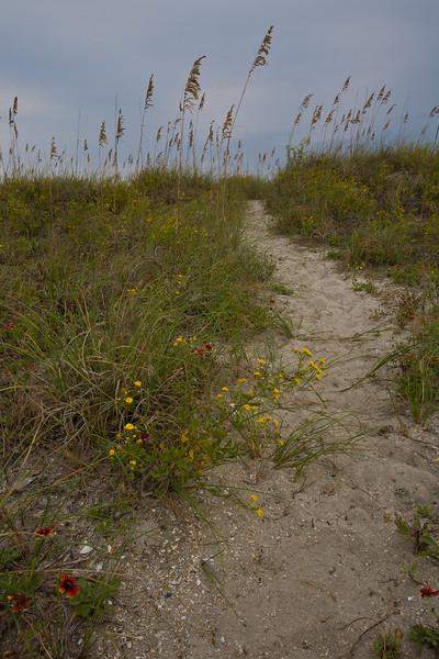 NC-2007-090: Masonboro Island, New Hanover County, NC, USA