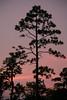 NC-2006-016: Hampstead, Pender County, NC, USA