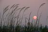 NC-2006-007: Topsail Beach, Pender County, NC, USA