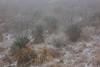 NM-2013-553: , Dona Ana County, NM, USA